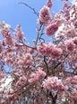 Japanischer Garten_10