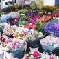 Bloemenmarkt_7