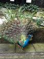 Kuala Lumpur Bird Park_8