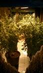 Hash Marihuana & Hemp Museum_3