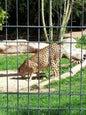 Wilhelma, zoológico y jardín botánico_8