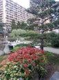 Jardín japonés de Mónaco_6