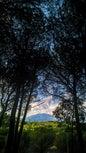 Pineta dei Monti Rossi_2