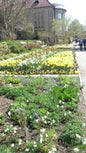 Giardino botanico Nymphenburg di Monaco di Baviera_7