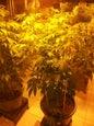 Hash Marihuana & Hemp Museum_9
