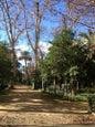Parco di María Luisa_8