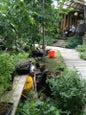 Dalston Eastern Curve Garden_10