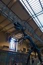 Galerie de Paléontologie et d'Anatomie comparée du Muséum national d'Histoire naturelle_2