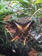 Jardin des Papillons_3