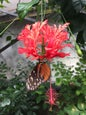 Jardin des Papillons_4