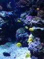 Aquarium du Pacifique_1