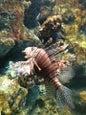 Phuket Aquarium_2