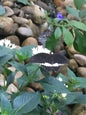 Jardin des Papillons_6