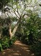 Jardin botanique tropical Fairchild_9