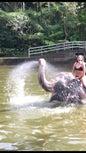 Elephant Safari Park_10
