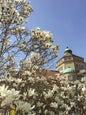 Giardino botanico Nymphenburg di Monaco di Baviera_11
