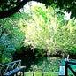 Parque Ecológico Ojos Indígenas_3