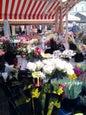Cours Saleya_7