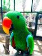 Gili Meno Bird Park_1