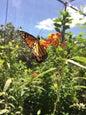 Butterfly farm_4