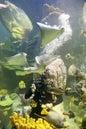 New England Aquarium_2
