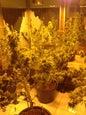 Hash Marihuana & Hemp Museum_8