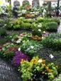Bloemenmarkt_3