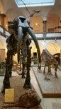 Paläontologisches Museum München_6