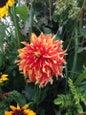 Giardino botanico Nymphenburg di Monaco di Baviera_9