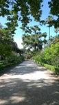 Jardin botanique de Palerme_9