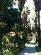 Jardin botanique de Palerme_3
