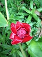 Flecker Botanic Gardens_2