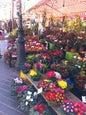 Cours Saleya_4