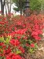 Namsan Park_2