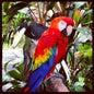 Kuala Lumpur Bird Park_1