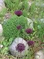 Botanisk Have_12