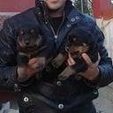 evcil-pet-shop-73467436