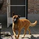 frank-van-wanrooij-6871519