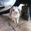 thumper-konijn-2843844