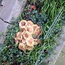 maurits-zoekt-kamer-in-amsterdam-29661446