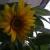 nbranx-17956256