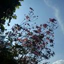 tobias-rose-5096812