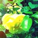 yinske-silva-5548008