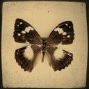 natalia-priymak-45743396