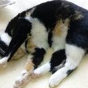 kittycat-hauberzaft-17363836