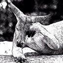 canguru-branco-43102201