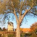 willemjan-van-werven-10866622