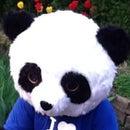 Buddy The 48west Panda