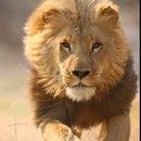 Gaby Lion