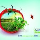 Gimel Organic